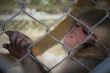 نشریه نظم گستر سهند: مرگ، همقفس حیوانات باغوحش تبریز