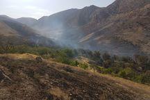 6 هکتار باغ در روستای پلنگ آباد ساوه طعمه حریق شد