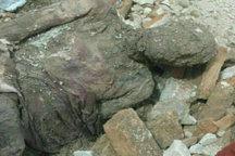 نخستین واکنش معاون رییس جمهور درباره مومیایی کشف شده در شهرری
