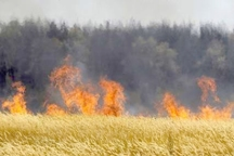 آتش در 125 هکتار از گندمزارهای گلستان