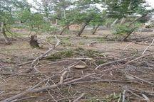 ماجرای قلع و قمع درختان لشگر ۶۴ ارومیه چه بود؟