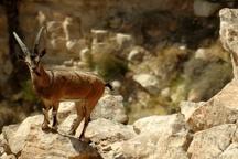 «کوه هوا» با طبیعتی بکر و بینظیر در لامرد  در آرزوی منطقه گردشگری و پارک ملی