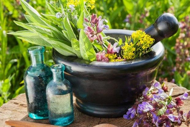 گیاهان دارویی، داروی رونق اقتصادی و اشتغالزایی