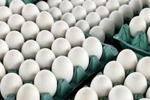 150 تن تخم مرغ مازاد بر نیاز روزانه در خراسان رضوی تولید می شود