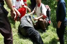 نجات معجزهآسای پیرمرد خداآفرینی بعد از سه روز در جنگل
