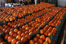 حمایت از صادرکنندگان محصولات کشاورزی در خوزستان