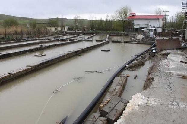 سیل به 53مزرعه پرورش ماهی مازندران خسارت زد