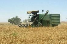 یک میلیون و 100هزار تن گندم در خوزستان خریداری شد