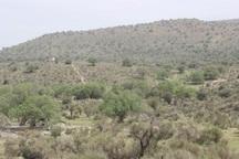 3600 هزار هکتار منابع طبیعی خراسان جنوبی در کاداستر ثبت شد