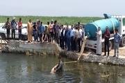 470 هزار بچه ماهی در تالاب شادگان رها سازی شد