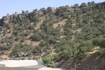 چهار هزار هکتار از مراتع شهرستان روانسر بیمه شده است