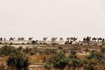 طرح احیای مراتع جنوب کرمان  در 1060 هکتار عملیاتی شد
