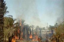 بخشدار: آتش سوزی به نخلستان روستای گنز بخش ایرندگان خاش خسارت زد