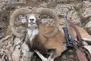 شکارچی غیرمجاز در مه ولات به ۲ سال حبس محکوم شد