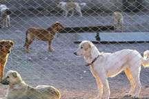 ایجاد مکان مناسب برای نگهداری سگهای ولگرد شهر بوشهر