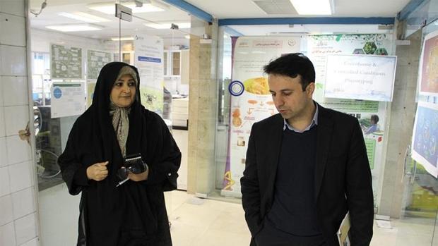 کلکسیون ارقام مناسب شیرین بیان کشور در اصفهان جمع آوری شد