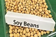 افزایش صادرات سویا از آمریکا به ایران بعد از تحریم ها