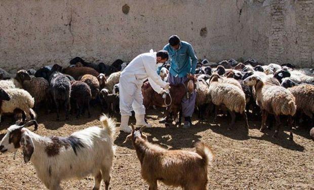 61 هزار راس دام در دره شهر مایه کوبی شدند
