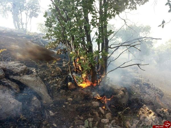 مهار آتش سوزی جنگل های بدره  دود جنگل ناشی از چند کنده خشک است