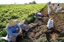 یک سوم اشتغال استان اردبیل مربوط به کشاورزی است