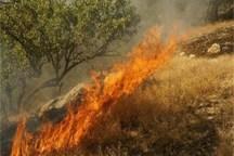 پنج هکتار از اراضی مرتعی بانه طعمه حریق شد