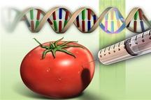 تحقیقات علمی برای مضر بودن محصولات تراریخته انجام نشد