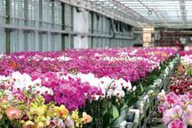 150 میلیارد ریال در دهکده گل و گیاه محلات سرمایه گذاری شد