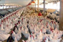 افتتاح 3 پروژه کشاورزی با اعتبار یک میلیارد تومان در دهگلان