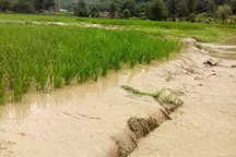 سیل 6 هزار میلیارد ریال به کشاورزان مازندران خسارت زد