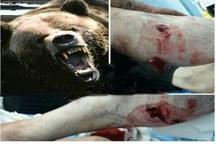 حمله خرس به کودک 10 ساله در چهارمحال و بختیاری