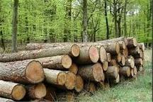 کشف 2 تن چوب جنگلی قاچاق در آمل