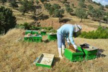 ۱۱۰ طرح اشتغالزا در روستاهای مراغه با حمایت بنیاد برکت اجرا میشود