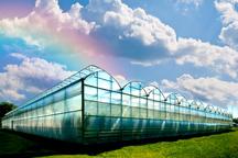 25 درصد گلخانه های عنبرآباد در دولت تدبیر راه اندازی شد
