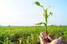 ' کسر درصد پوششی' برای بیمه محصولات زراعی حذف شد