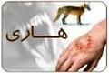 مرگ 5 نفر بر اثر بیماری هاری در زابل  1200 مورد حیوان گزیدگی در سیستان