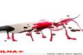 رقابت برای ازدواج جان 2 نوجوان گنبدی را گرفت  رسیدگی ویژه به پرونده قتل