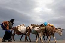 کوچ پاییزه عشایر قشقایی به شهرستان خنج آغاز شد
