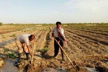 تسهیلات کشاورزان خسارت دیده بویراحمد امهال می شود