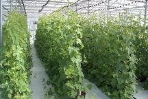 2386طرح بخش کشاورزی سیستان وبلوچستان تسهیلات دریافت کردند