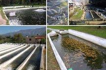 تولید6هزار تن ماهی سردآبی در شهرستان اردل