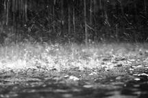باد و باران و برهم خوردن موکب های مردم در چذابه