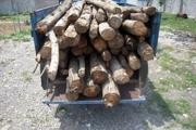 متخلفان قطع درختان جنگلی در پلدختر دستگیر شدند