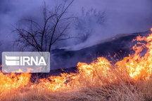 آتش سوزی در نخلستانهای حناشور دشتی