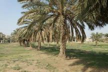 80 کشاورز شوشی پمپ های آب خود را برای نجات نخیلات جنوب بستند