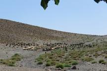 600 هزار هکتار مراتع تخریب شده اصفهان به مراقبت خاص نیاز دارد