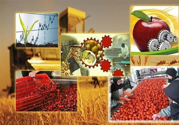 370 هزار تن مواد خام کشاورزی استان تهران جذب شد