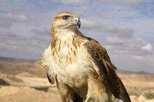 شکارچی پرنده شکاری به تحمل حبس محکوم شد