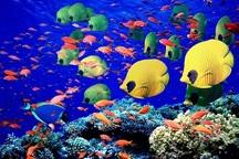 340 هزارقطعه ماهی زینتی در چهارمحال و بختیاری تولید شد