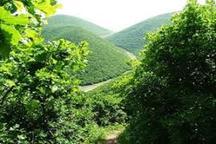 جانمایی صحیح درختان در مناطق شهری باعث کاهش 2تا 8 درجه ای دما می شود