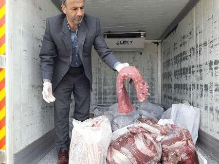 توقیف 604 کیلوگرم گوشت فاسد گوساله در آستارا
